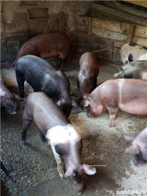 Porci, purcei - imagine 2