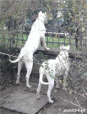 Vand catelusi Dog Argentinian - imagine 3