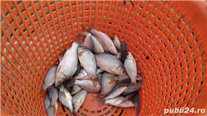 Puiet pește crap, somn,caras, ten - imagine 3