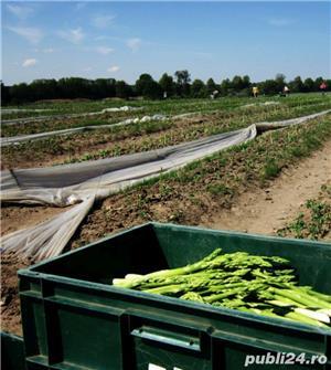Agricultura - Germania  - imagine 3