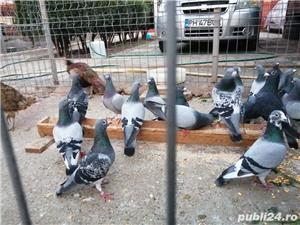 Vând porumbei  - imagine 2