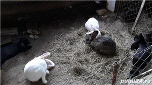 Vand iepurii - imagine 3