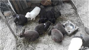 Vand iepurii - imagine 4