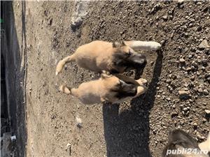 Puli kangal - imagine 2
