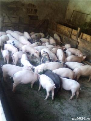 Porci, purcei - imagine 5