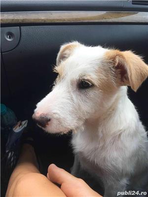 Donez metis Terrier - imagine 3