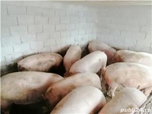 Vând porci și purcei - imagine 3