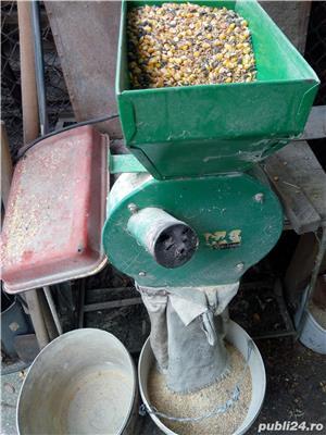 Curcani 10 -15kg,hrăniți cu cereale - imagine 4