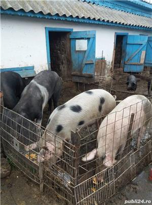 Porci de vânzare  - imagine 2