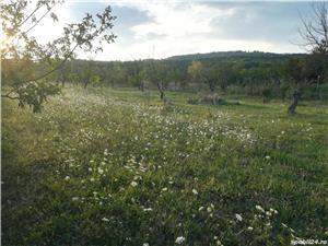 Teren intravilan comuna Dumbravești sat Malaestii de jos - imagine 9