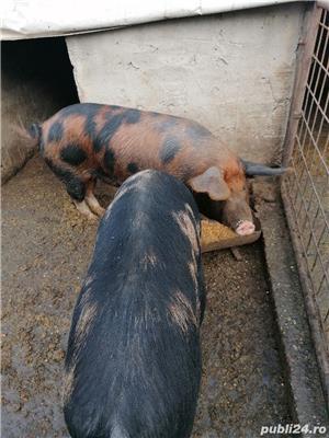 Vând porci crescuți bio - imagine 8