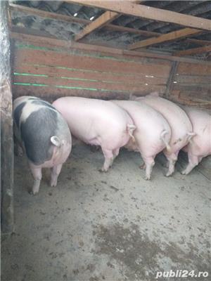 porci de vanzare - imagine 5