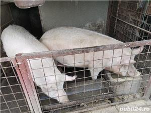 Porci de carne - imagine 3