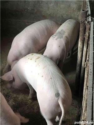 porci si purcei crescuti in gospodarie proprie - imagine 4