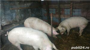 Porc crescut in curte - imagine 1