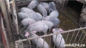 Porci, 12 lei kg - imagine 2