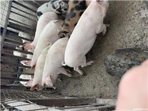 Vând:porci,găini,rate - imagine 1