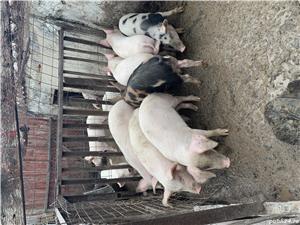Vând:porci,găini,rate - imagine 2