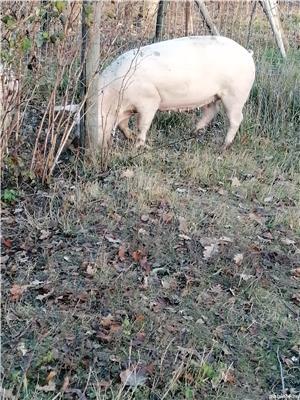 Vând porc - imagine 3