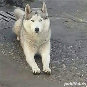 Husky monta  - imagine 1
