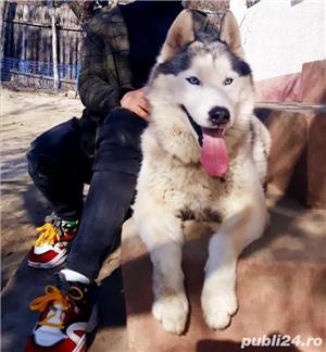 Husky monta  - imagine 4