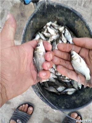 Puiet pește crap, somn,caras, ten - imagine 7