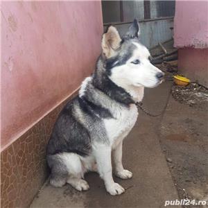 Husky - imagine 1