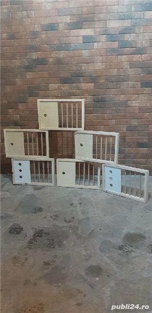 Fete de boxe pentru porumbei. - imagine 1