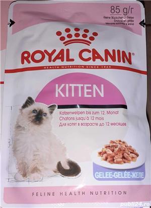 42 plicuri hrana umeda Royal Canin Kitten - imagine 4