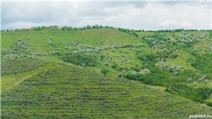 Vând/arendez plantație de cătină certificată ecologic - imagine 2