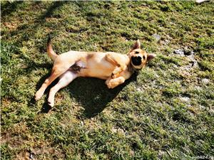 Pensiunea Canina Apache - imagine 10