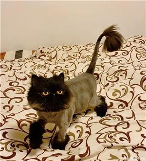 Tund caini si pisici - imagine 3