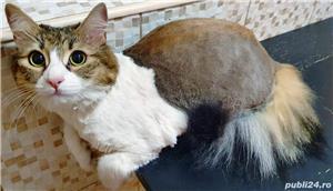 Tund caini si pisici - imagine 6