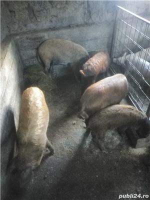 Porci și purcei de vanzare - imagine 2