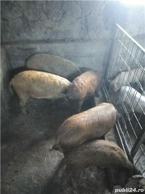 Porci și purcei de vanzare - imagine 3