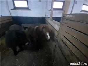 Ponei si vitelusa de vanzare si purcei de vanzare - imagine 9