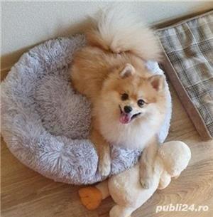 Patut pufos pentru animale - imagine 1
