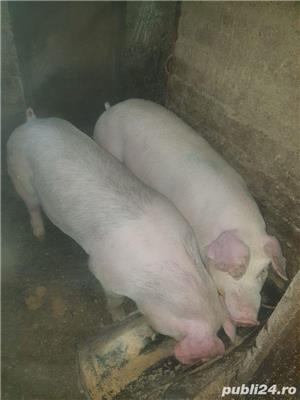 porci de carne  - imagine 1