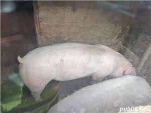 porci de carne  - imagine 8