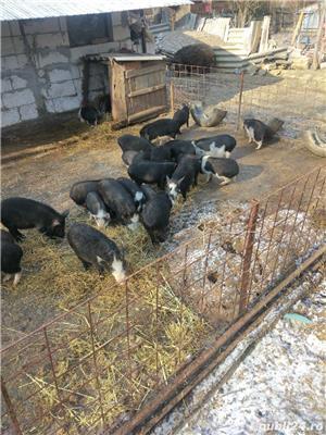 Porci și purcei de vanzare - imagine 8