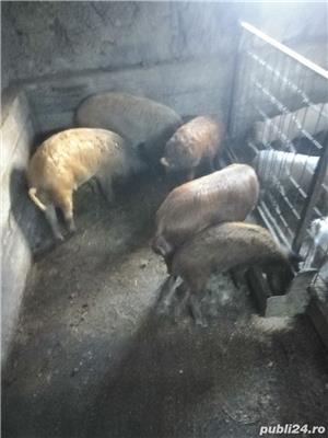 Porci și purcei de vanzare - imagine 5