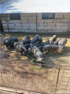 Porci și purcei de vanzare - imagine 10