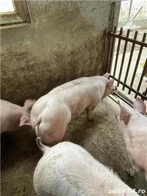 Porci și purcei! - imagine 3