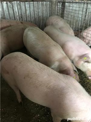 Porci pt sacrificat și purcele pt reproducție - imagine 7