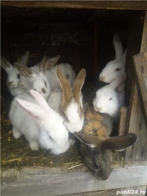 iepuri - imagine 1
