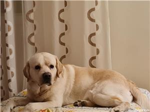 Labrador monta - imagine 1