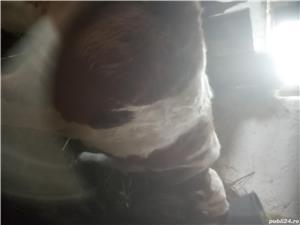 Vindem vitel - imagine 2