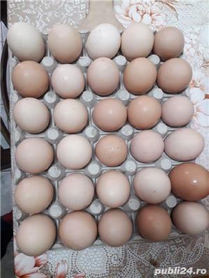 Carne, ouă proaspete pentru consum  - imagine 6