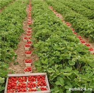 Agricultura Bremen - imagine 1