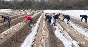 Agricultura Bremen - imagine 3